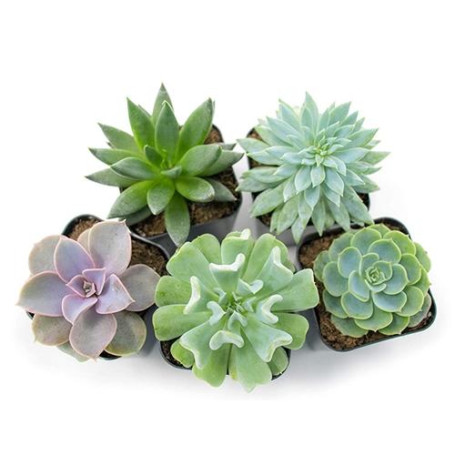 best succulent gift
